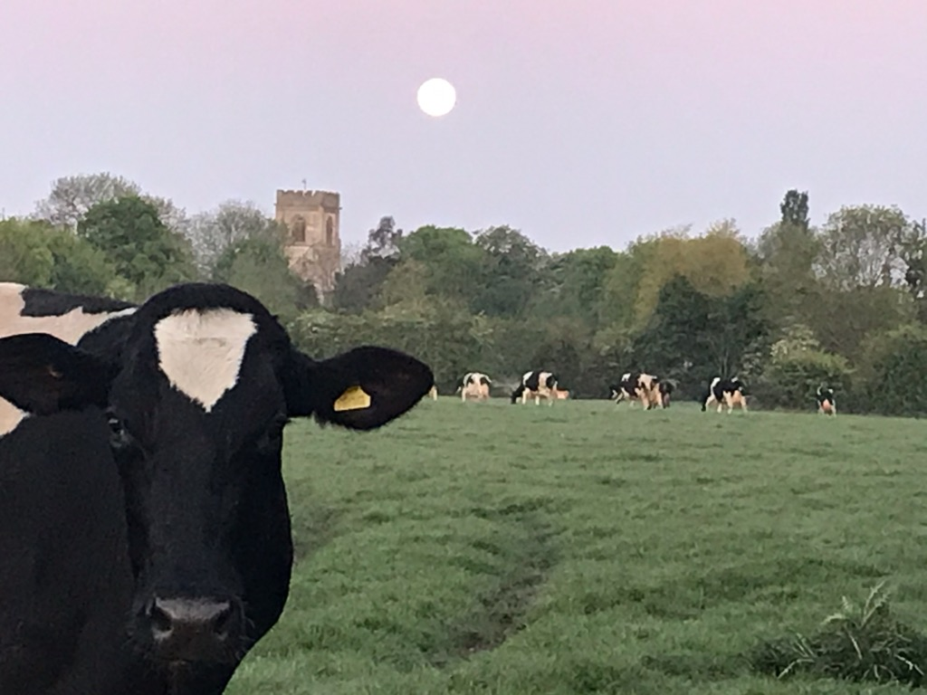 'Moon over the Cow' by R Collishaw