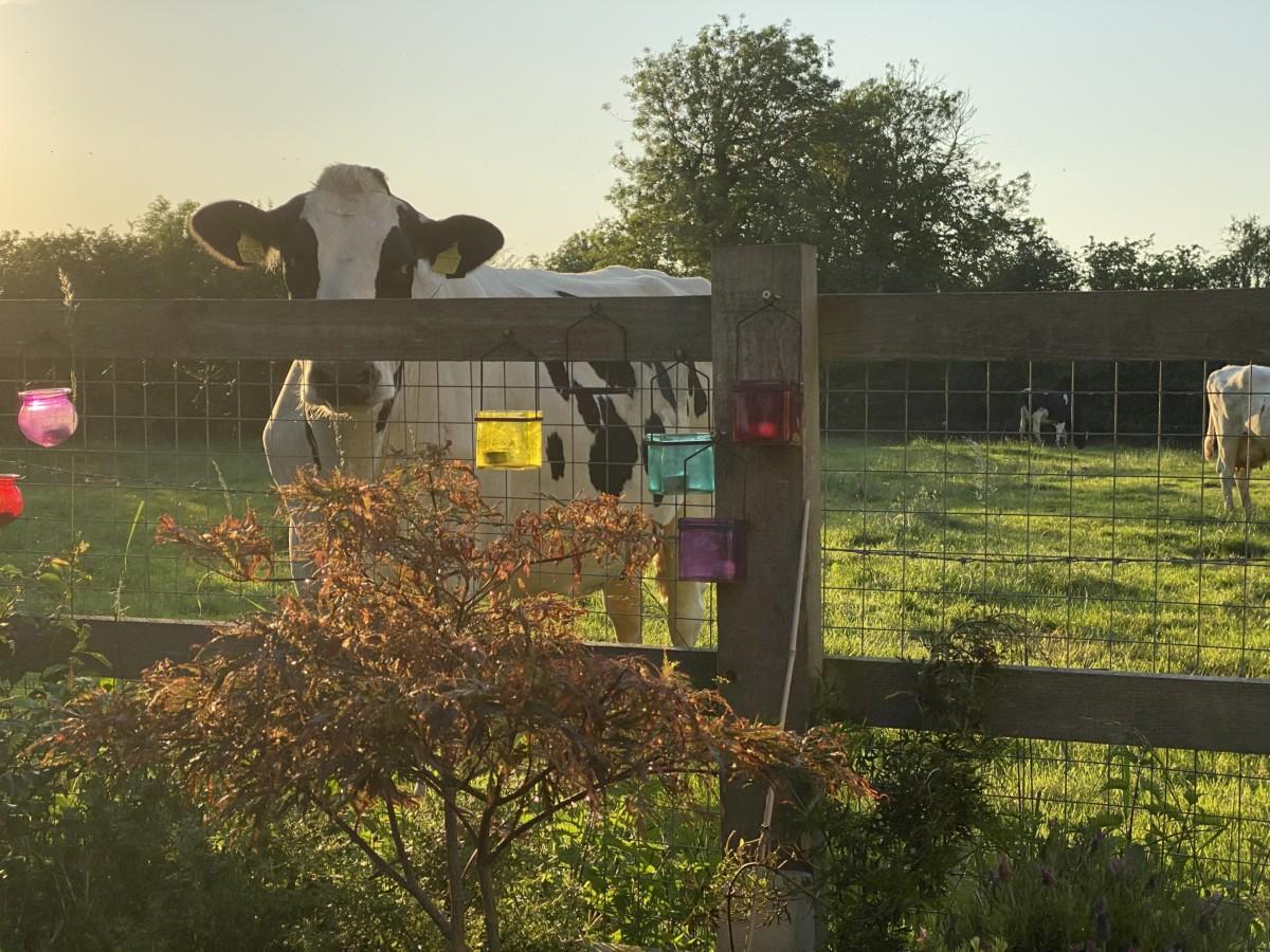 Hickling Calendar 2022: animals and wildlife